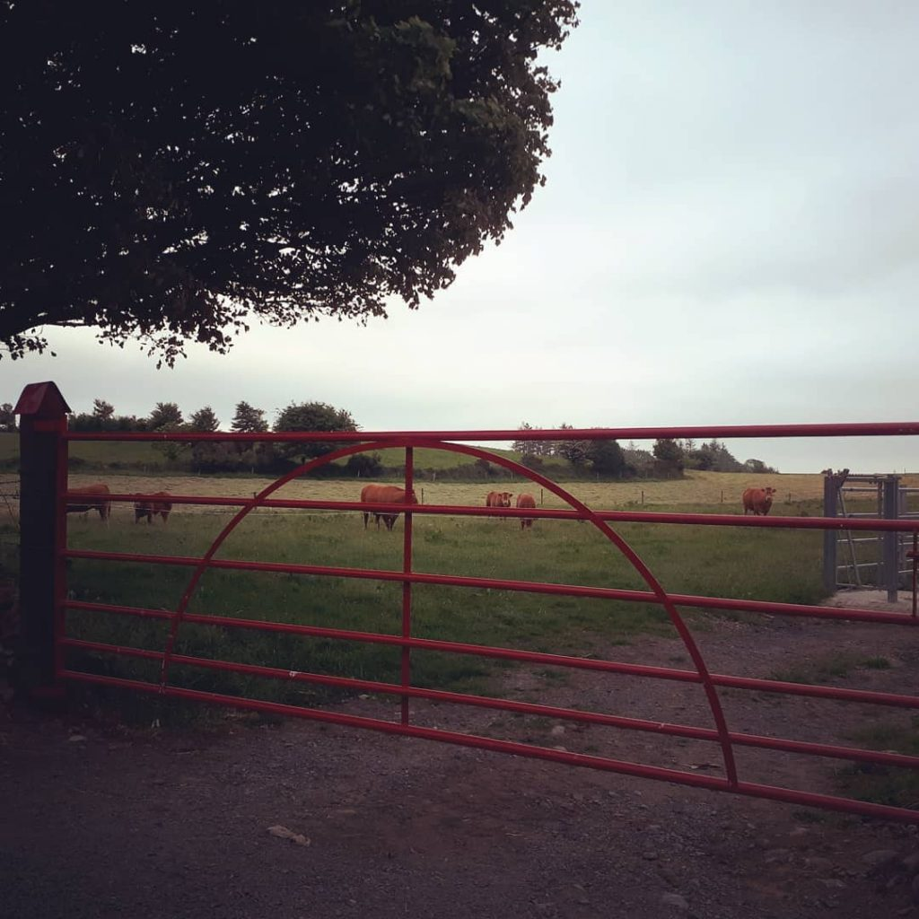 Traditional Field gate, Aughamore, Co Mayo, finished in Red